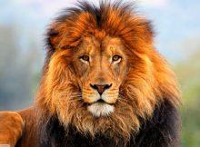 el leo