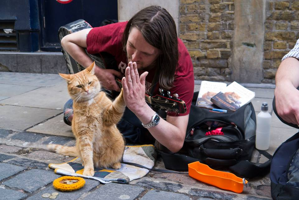 gatos domesticos imagen 2